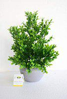 Ashiyanadecors Artificial Natural Looking Green Plant in Grey Pot for Home & Office Dcor