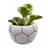 India Meets India Ceramic Football Shaped Planter Pot Flower Pot Handicraft by Awarded Indian Artisan (White, Small)
