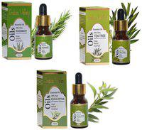 Indus Valley Natural Rosemary plus Tea Tree plus Eucalyptus Oil (Combo Pack) For Shiny And Smooth Hair- 45 Ml