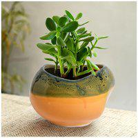 Tashveen Articles Ceramic Planter (Yellow and Green) Indoor planter/ Outdoor Planter/ Pot/ Gamla