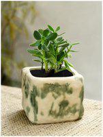 Tashveen Articles Off White and Green / Flower Pot/Gamla Both Ceramic Planters