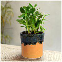 Tashveen Articles Ceramic Planter (Yellow and Green Glazed) Indoor planter/ Outdoor Planter/ Pot/ Gamla