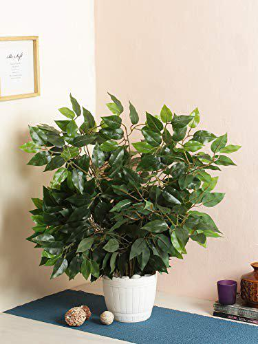 Fourwalls Artificial Decorative Ficus Plants & 42 Leaves (60 cm Tall, Set of 6, Green)